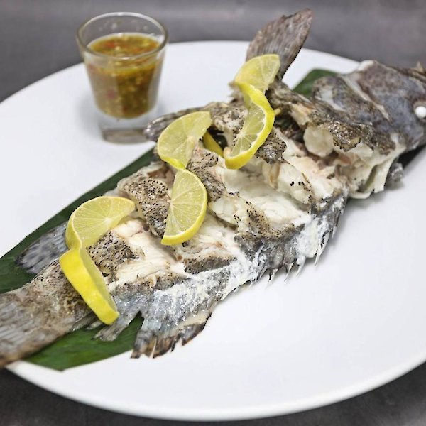 Steamed Grouper with Herbs & Salad
